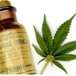 Cannabis_Oil